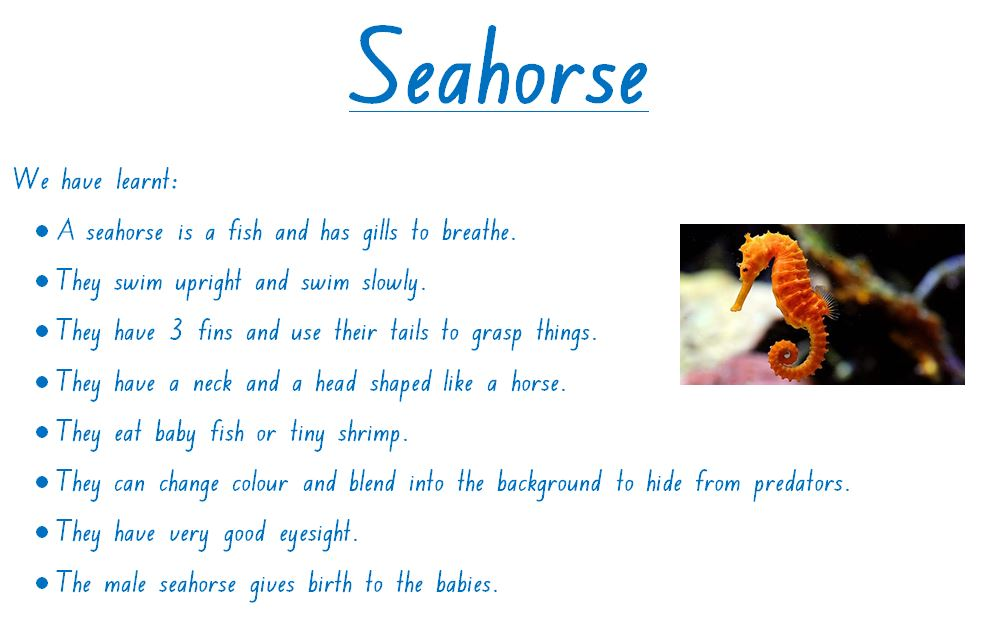 Seahorse Facts - Keeping Up With KP